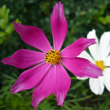 Flora Carpatilor